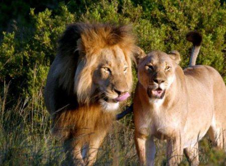"""Dal Kenya alla Tanzania ecco dove si può soggiornare nelle location de """"Il Re Leone"""""""